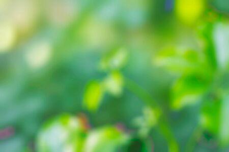녹색 숲 흐리게 이미지와 나뭇잎.