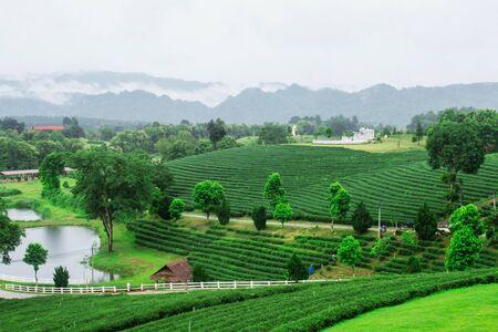 Natuur en schoonheid op de theeboerderij. Stockfoto