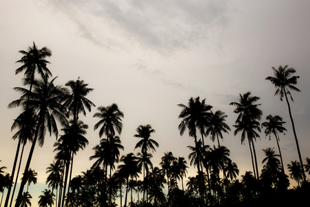Coconut tree at sky with the silhouette in summer.