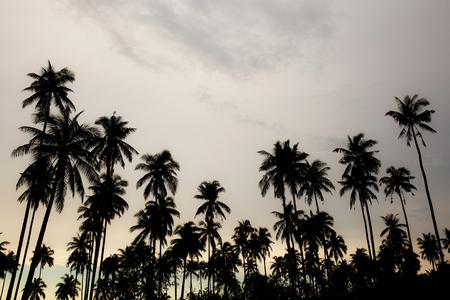 Drzewo kokosowe na niebie z sylwetką w lecie.