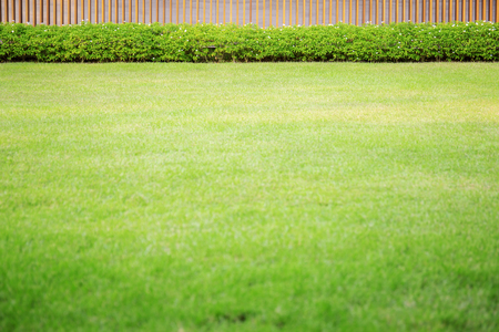 Green lawn in garden white texture background.