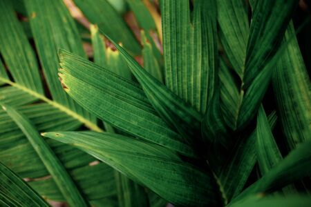 Palm leaves of green in park with texture background.