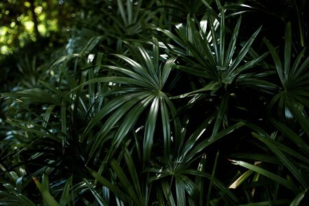 Palm leaves in park with the darkness of background. Reklamní fotografie