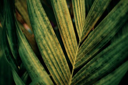 Palm leaves at sunlight with texture background. Stok Fotoğraf