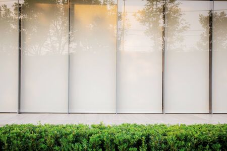 Boxwood in gaden with a wall of glass. Stock Photo