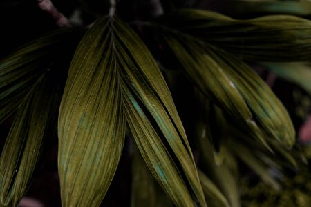 Leaves of palm in forest with texture background.