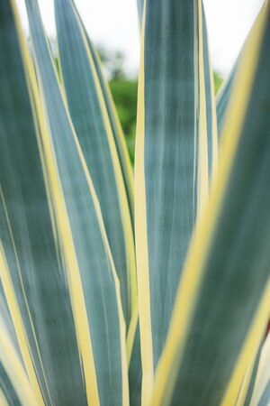 Leaves plant in garden with the texture background. Stock Photo