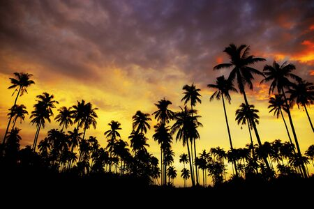 Silhouette of palm tree at sunset on beach with colorful sky.
