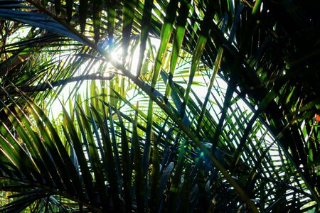 Palm leaves with sunlight at sky. Stockfoto