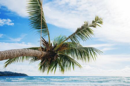 Palm tree at the sea with the blue sky in summer. Stock Photo