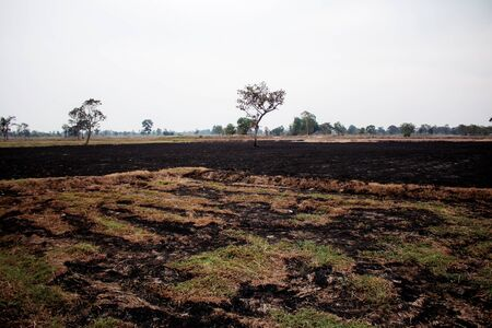 Grass was burned on fields in the countryside.