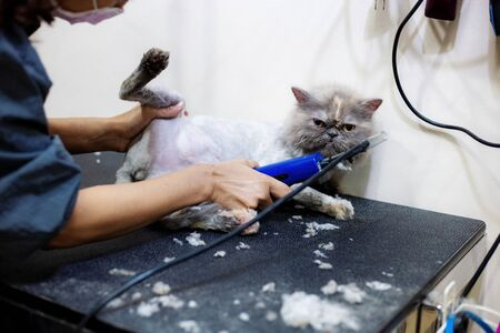 Healthy cat with woman are trimming hair in pet shop.