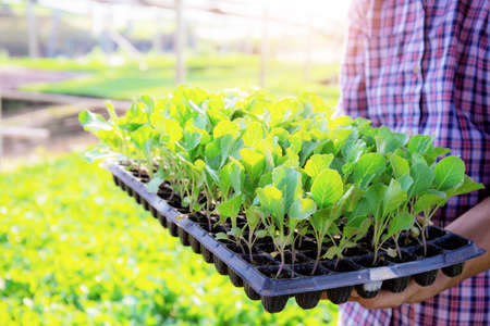 Gardeners stand to hold organic vegetable growing trays in farm.