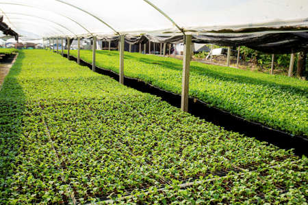 Organic farming of seedlings are growing in greenhouse.