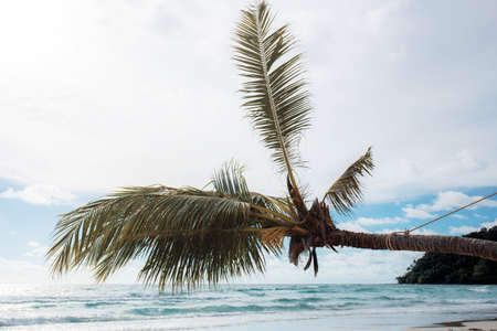 Coconut tree at the sea with sky.