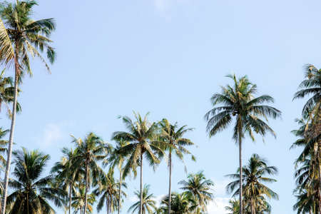Coconut tree at the sky with sunlight. 写真素材