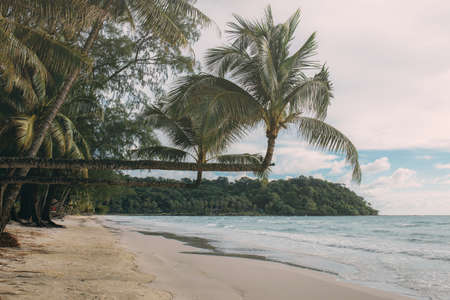 Coconut tree on beach at the sea with sunlight.