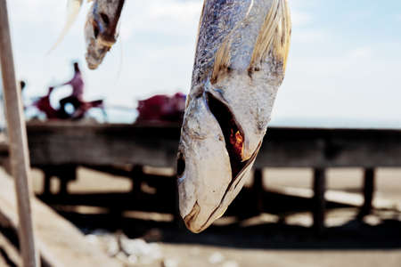Dry fish of hanging at sea with sunlight in summer.
