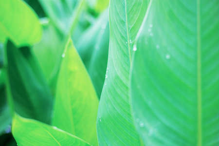Green leaves of plant in garden with texture background.