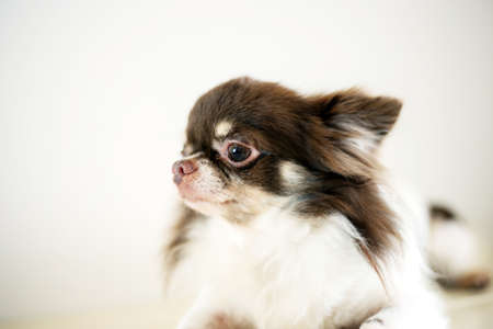 Pet dog with cute on white background.