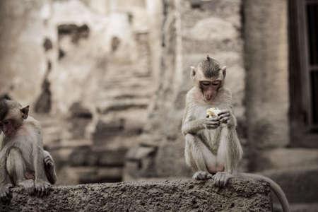 Baby monkey on building in a park. Standard-Bild