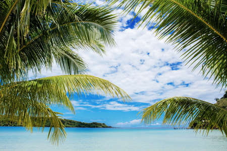 Palm tree on beach at sea with the blue sky.