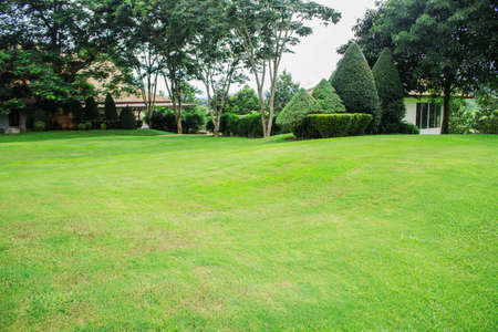 Lawn and ornamental trees in the garden.