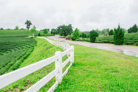 White fence at tea plantation and natural freshness in the rainy season. Standard-Bild