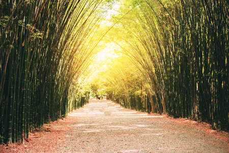 Bamboo beautiful facade in a row on the road. Standard-Bild