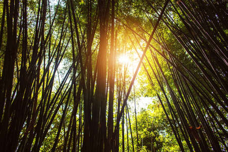 Sun shining on bamboo with of shadows.