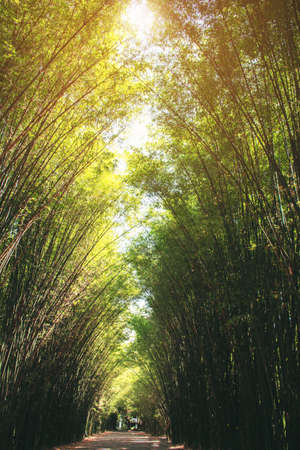 bamboo arranged in long rows on the light in daytime.