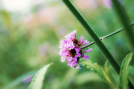 Purple flowers head of blooming with the beautiful in nature. Standard-Bild
