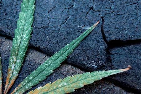 Marijuana leaves on wooden floor with background.