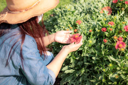 Young woman caring flowers on plot in the garden. Standard-Bild