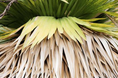 Palm leaves of dries in park with background.