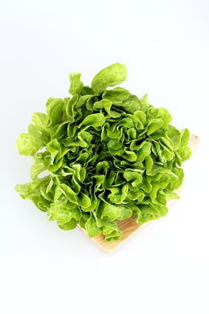 lactuca: Lettuce Lactuca sativa