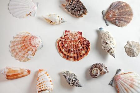 Seashells collection on white background.