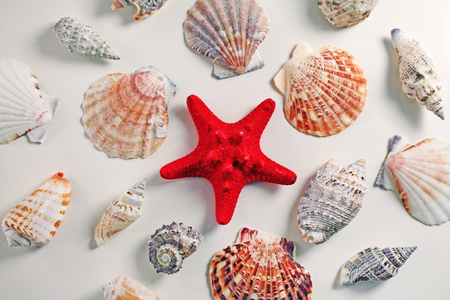Red Starfish with Cockleshell on white background. Seashell background. Stock Photo