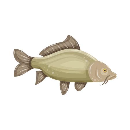 Common Carp isolated on white background. Fresh raw fish - vector illustration. Design element for emblem, logo, label, sign, brand mark