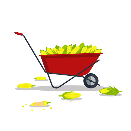 Vector yellow corn in red wheelbarrow, flat style concept isolated on white background. Ripe vegetable, corncobs, farming design elements.