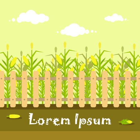 Vector yellow cornfield with fence in flat style. Ripe corn vegetable, corncobs, farming harvesting design elements. Farm landscape