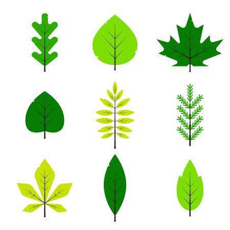 Diferentes hojas verdes en estilo plano aislado sobre fondo blanco. Hoja de primavera, hojas de rama de bosque, arce, abeto, roble, serbal, follaje vernal de abedul - ilustración vectorial.