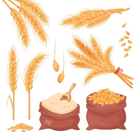 PrintWheat, barley, oat spikes and grains. Bunch of ears, seeds and flour in the sacks isolated on white background. Set of natural farming food elements in cartoon style, vector.