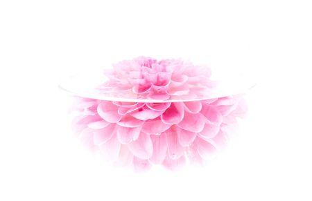 Carmes� flor peon�a hundidos en el agua. Extra alta clave.