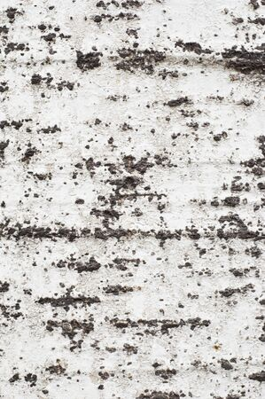woodsy: Old tree coarse bark texturebackground #1