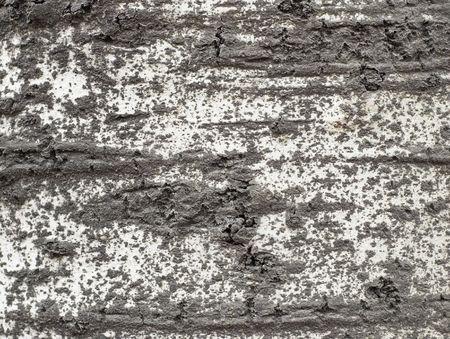 coarse: old tree coarse bark texturebackground #2 Stock Photo