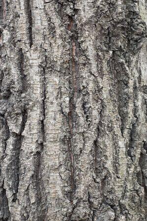 Old tree coarse bark texture/background #3 Stock Photo - 667887