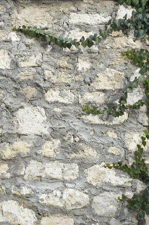 ivy on limestone and cement wall background Stock Photo - 708051