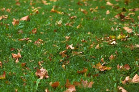 Dry yelow leaves on green grass carpet. Shallow DOF (selective focus). photo