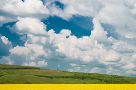 sunny spring day, view of flowering rape field with cloudy sky Stock Photo - 3038628